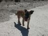 Doggi_Dog.jpg